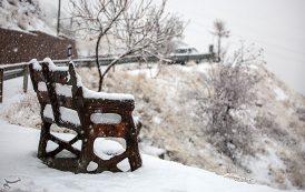 بارش برف در آخرین روزهای پاییز -سنندج