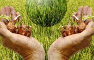دلایل کاهش ورود به سرمایهگذاری در بخش کشاورزی