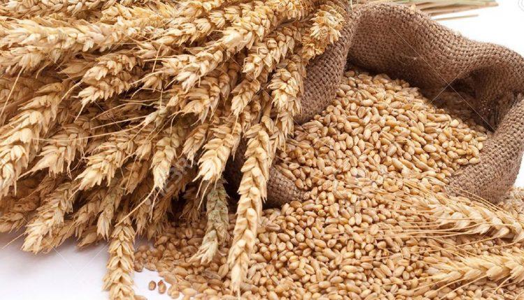 دولت راضی به واردات گندم نیست