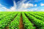 راهیابی محصولات جدید کشاورزی به بورس کالا