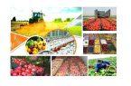 توثیق گواهی سپرده محصولات کشاورزی در بورس کالا